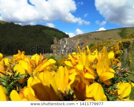 Foto stock: Glenmacnass Waterfall Wicklow Mountains County Wicklow Irelan