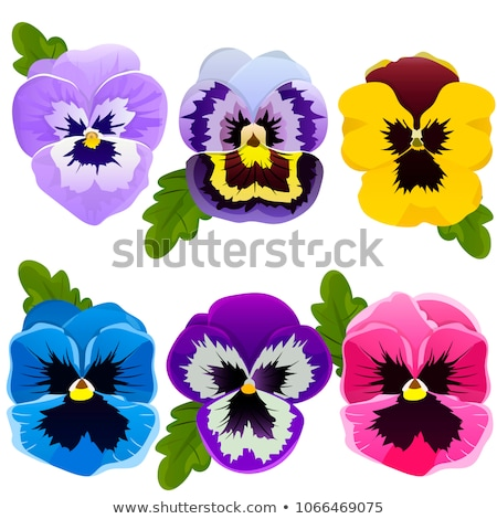 colorful pansies, vector set Stock photo © beaubelle