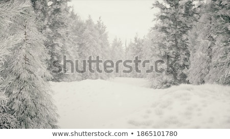 Snowy trail in the park stock photo © Arezzoni