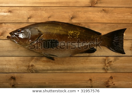 Grouper fish seafood, fishing catch over wood Stock photo © lunamarina