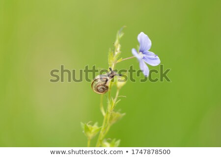 green plant with snails climbing up spring field stock photo © lunamarina