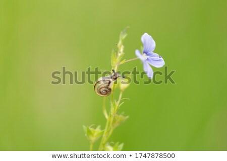 Green plant with snails climbing up  spring field Stock photo © lunamarina