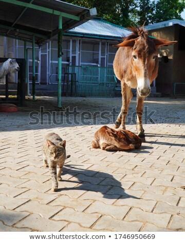 goats lineup Stock photo © ArenaCreative