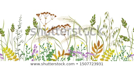 Seamless Texture of  Withered Grass. Stock photo © tashatuvango