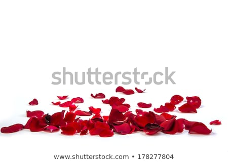 beautiful heart of red rose petals isolated on white stock photo © tetkoren
