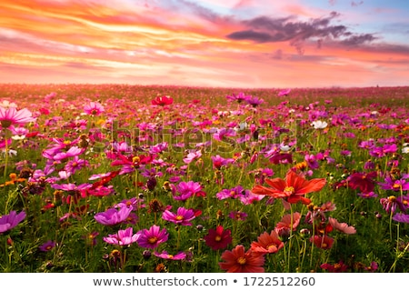 Kwiat pola kraju krajobraz zielone dziedzinie Zdjęcia stock © tainasohlman