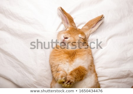 спальный кролик ребенка животного магия Сток-фото © orensila