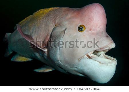 úszik · akvárium · hal · piros - stock fotó © Lynx_aqua