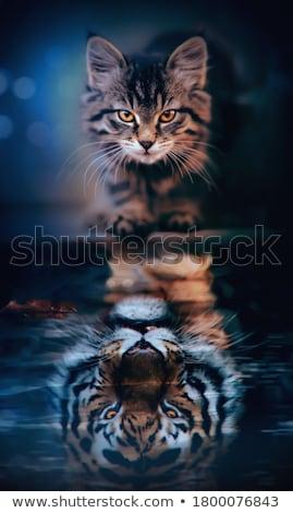 Kicsi házimacska házi kiscica áll tető Stock fotó © taviphoto
