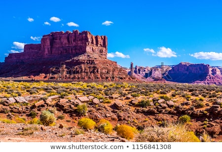 red rock canyon cactus trees nevada stock photo © rigucci