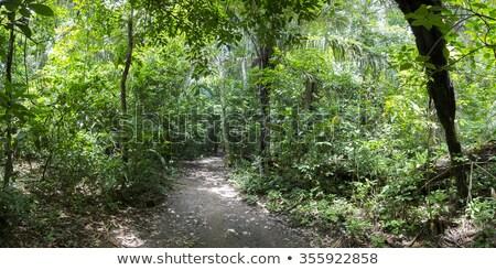 Bush riserva albero costa Madagascar foglia Foto d'archivio © lkpro