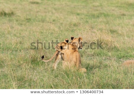 lion cub on the plains Kenya. mother with her babys Stock photo © master1305