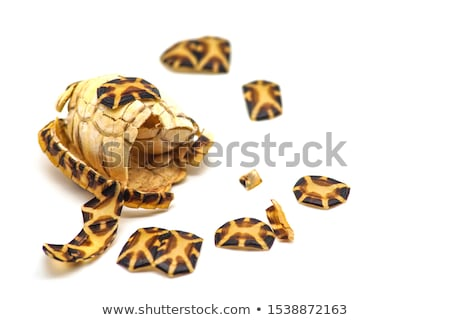 isolated dead turtle carcass Stock photo © taviphoto