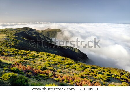Valley, Lomba de Risco,  Plateau of Parque natural de Madeira, Madeira island, Portugal stock photo © brozova