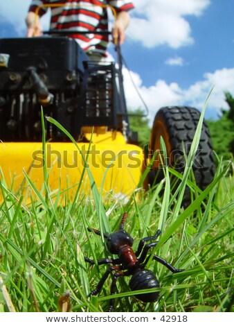 Hangya kertész gyep fűnyíró rajz illusztráció Stock fotó © orensila
