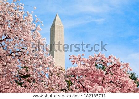 Washington Anıtı Washington mavi gökyüzü ünlü ağaç çim Stok fotoğraf © meinzahn