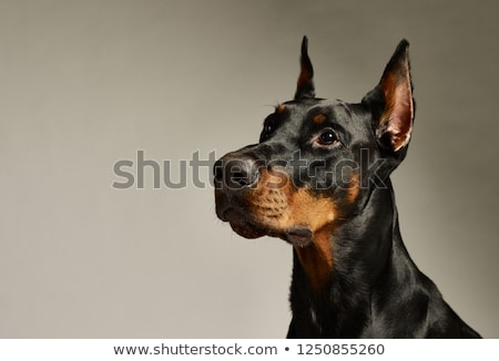 man with doberman head Stock photo © Samoilik