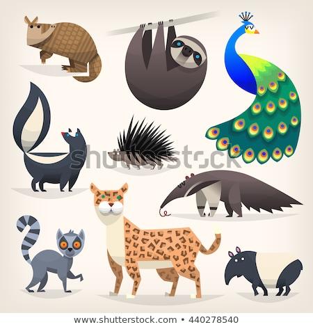 Skunks wysoki jakości projektu tle Zdjęcia stock © ridjam