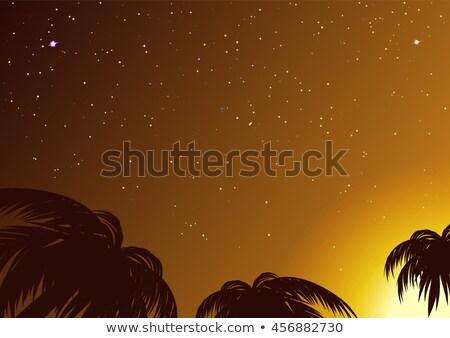 Csillagos ég trópusi pálmafák illusztráció vektor formátum Stock fotó © orensila