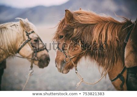 Rajz kettő ázsiai emberek illusztráció fehér Stock fotó © bluering