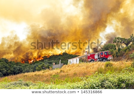 Wóz strażacki ognia pożar lasu ciężarówka lasu Zdjęcia stock © bluering