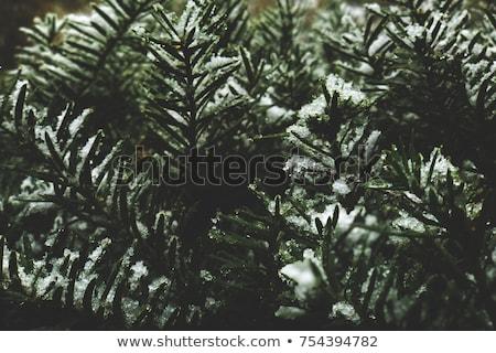 Detail sneeuw abstract patroon ski behang Stockfoto © hamik