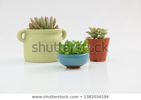 different species of plants stock photo © bluering