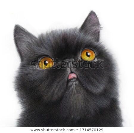 fluffy black cat stock photo © blackmoon979