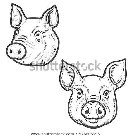 Cerdo cabeza cerdo granja logo carne Foto stock © Andrei_