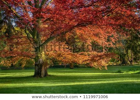 Chêne prairie automne grand herbe verte autour Photo stock © butenkow