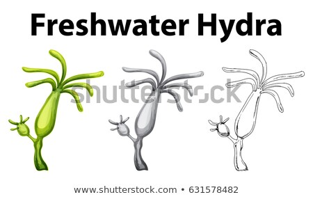 Doodle drawing for freshwater hydra Stock photo © bluering