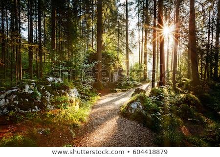 Weg alpen dramatisch zon licht afbeelding Stockfoto © magann