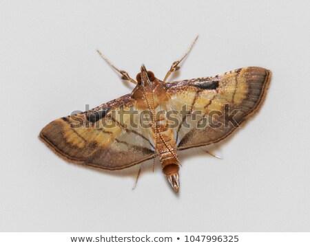Nacht vlinders zwarte textuur abstract Stockfoto © blackmoon979