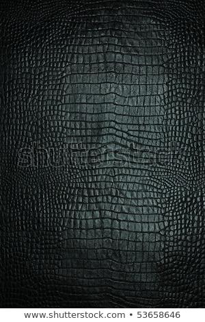 marrom · elegante · crocodilo · couro · bolsa · isolado - foto stock © acidgrey
