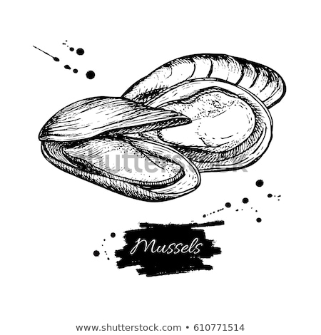 Seafood Delicacy Bivalve Clam Oyster Sketch Poster Stock photo © robuart