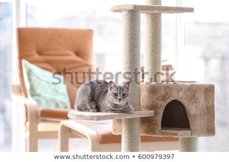 Kittens playing on cat condo Stock photo © colematt
