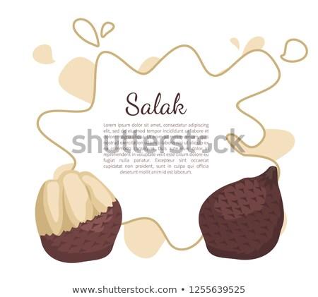 Palmeira exótico suculento fruto vetor cartaz Foto stock © robuart