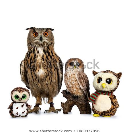 ceramic and Turkmenian Eagle owl, on white background. Stock photo © CatchyImages