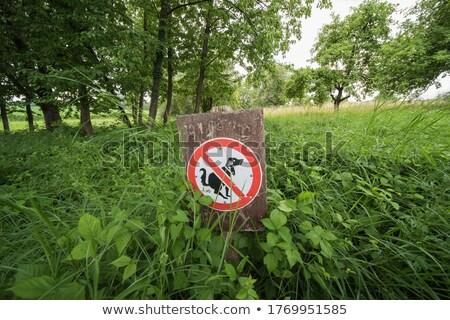 köpek · çim · park · jack · russell · suçlu - stok fotoğraf © galitskaya