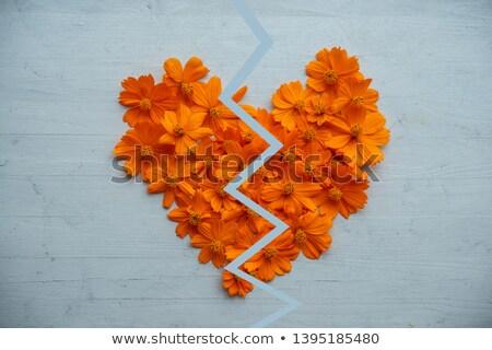 Broken heart made of orange cosmos  Stock photo © szefei