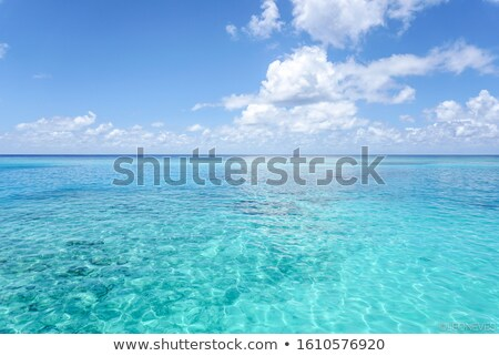 plage · belle · bleu · mer · sécher · arbre - photo stock © fyletto