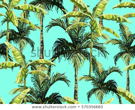 tropical banana palm trees with fruits and leaves stock photo © loopall