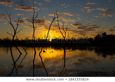 Silhouettes on the lake outback sunset Stock photo © lovleah