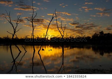 oázis · gyönyörű · vidéki · víz · tavasz · nap - stock fotó © lovleah