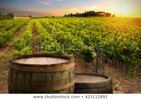 wine barrels and bottles in cellar stock photo © feverpitch