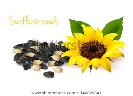 Dziedzinie rozwój słoneczniki kwiaty oleju kwiat Zdjęcia stock © robuart