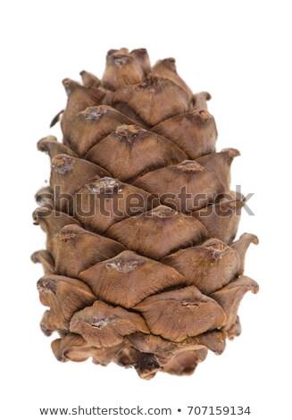 cones over white stock photo © fantazista