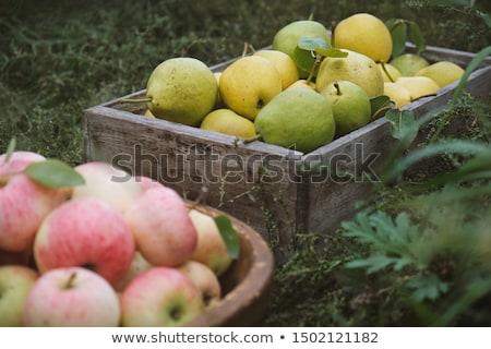 復古 成熟 梨 水果 老 木桌 商業照片 © stevanovicigor