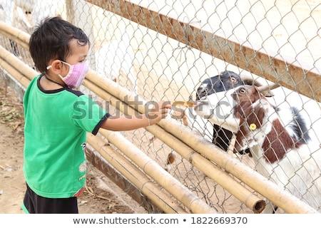 Cute weinig jongen vriendelijk geit gentleman Stockfoto © konradbak