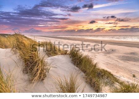holland · zand · nederlands · kust · gras · zon - stockfoto © ivonnewierink
